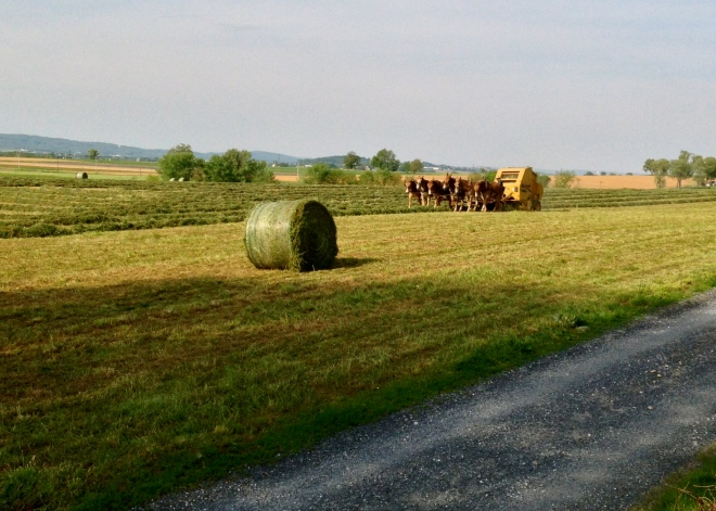 Making Hay While the Sun Shines in Lancaster County
